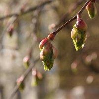 весна :: Сергей Черкасов