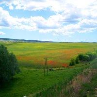Крымская степь весной :: Галина Pavel