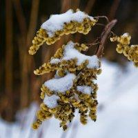 На морозе. :: Edward J.Berelet