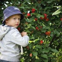 Маленький садовник.) :: Евгения Мазурова