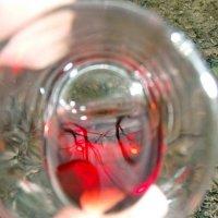 In vino veritas/// :: Svetlana Malysheva