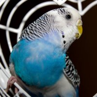 Птичий портрет :: Алиса Кондрашова
