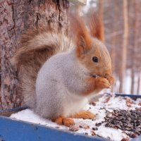 Белочка в лесу :: Нелли Чернова