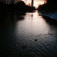 Утро, уточки плывут на кормешку :: Екатерина Василькова