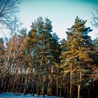 лес :: Максим Царев
