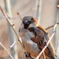 angry birds (= :: Алексей freedoom