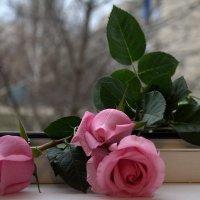 А завтра весна...!!!! :: ФотоЛюбка *