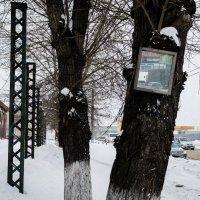 Зеркало :: Сергей Черепанов