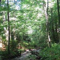 Карпатский лес. :: Алина Тазова
