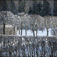 Литография Зимы :: Сергей Тихонов