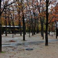 Люксембургский сад :: ирина )))