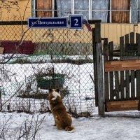 Пришел,называется в гости.. :: Алексей Сараев