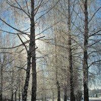 зима.солнце :: юрий иванов