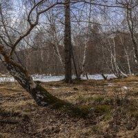 Первые признаки весны :: Евгений Герасименко