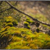 Кусочек тепла холодной зимою :: Юрий Клишин