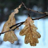 Кусочек осени в зимнем лесу. :: Любовь Анищенко