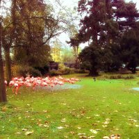 Фламинго ... перелётная птица? :: Сергей Бурыкин