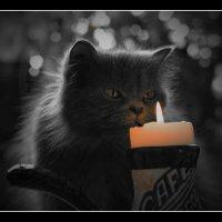 С Днём Кошек в России!  /  01.03 :: Victor Vinocurov