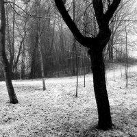 20 февраля 2 :: Юрий Бондер
