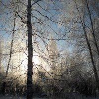 Мороз и солнце :: Анатолий Антонов