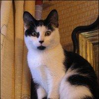 Наша кошка :: Валентин Яруллин