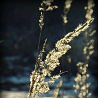 Весенний свет . :: Маry ...