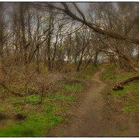 Чем дальше в лес, тем больше дров :: Denis Aksenov