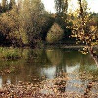 зеркало воды :: Ольга Волкова