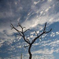 Закат в Эйлате :: Михаил Ананьев