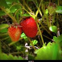 Вспомни ароматное признание Весны :: Serg Kocian