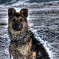 соседский пёс :: Андрей Афонасьев