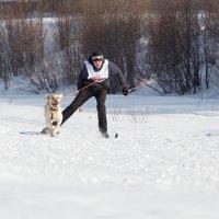 ски-джоринг :: Екатерина Тележенко