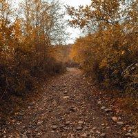 Осень :: Mail Mamedov