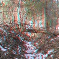 Овраг в лесу (3D) :: Анатолий Антонов