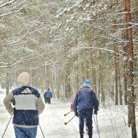 На мартовской лыжне :: Александр Садовский