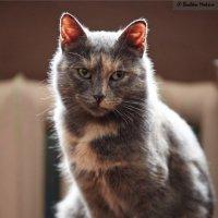 Просто светящаяся кошка :: Максим Бочков