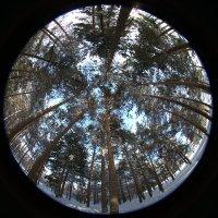 лесной хоровод :: Олег Петрушов