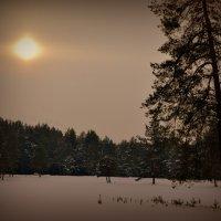 Холодное солнце. :: Лариса Красноперова
