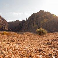 Пустыня :: Станислав Стариков