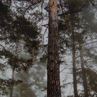 Утро в лесу :: Юрий Владимирович 34