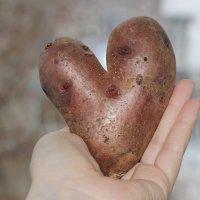 Любовь не картошка, не выбросишь в окошко))) :: Ольга Чазова