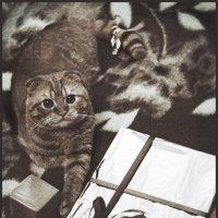 кот и подарок :: Артём O.
