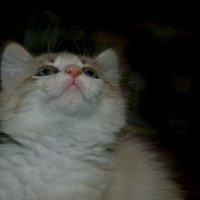 Котенок :: Elisavetta Litvinova