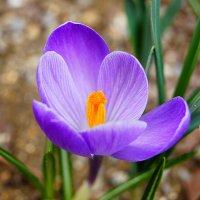 Весенний цвет :: Татьяна Гордеева