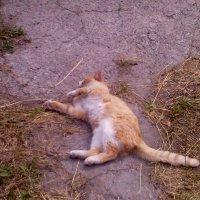 Уф, жарко! Я упал! Я устал! :: Ольга Кривых