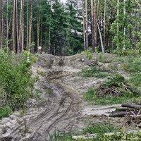 Лесной пейзаж :: Татьяна