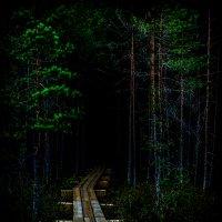 Загадочный лес :: Артур Озол