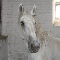 лошадка орхидея. :: Дмитрий .