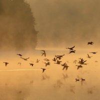 Утки в тумане :: Леся Вишня