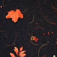 Осень выткала ковер...(3) :: Алина Тазова